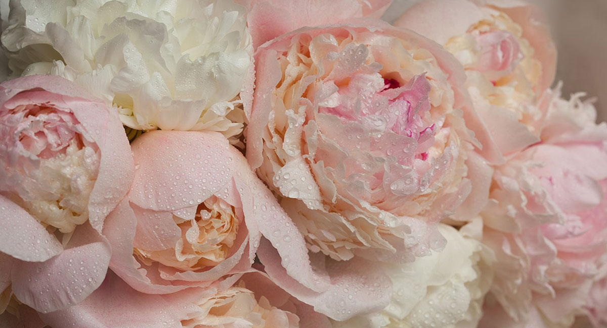 What are the Best Spring Wedding Flowers for You? By Terence Joseph Photography