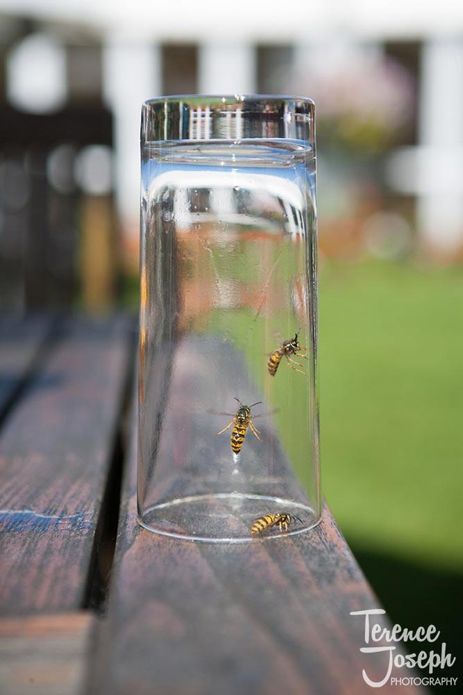 Wasps make a flying visit at Summer Wedding in Reading